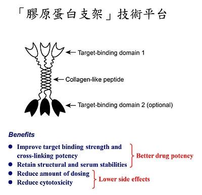 膠原蛋白支架技術平台