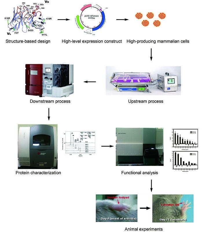 工研院蛋白質藥物開發核心能量