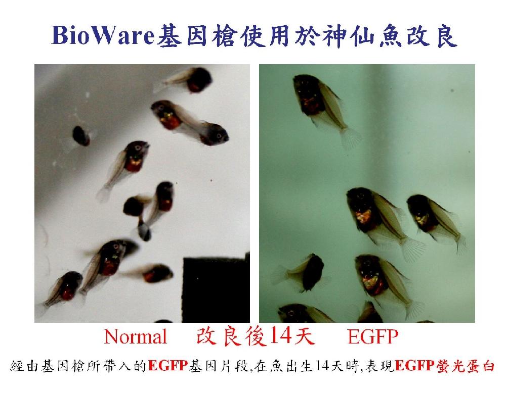 genegun-fish-9.jpg
