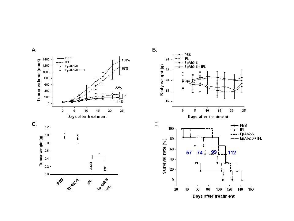治療性抗體EpAb2-6與大腸直腸癌臨床化療藥IFL結合後,能有效增進治療效果,減少治療期間動物體重下降情形,並且有效延長動物存活率。