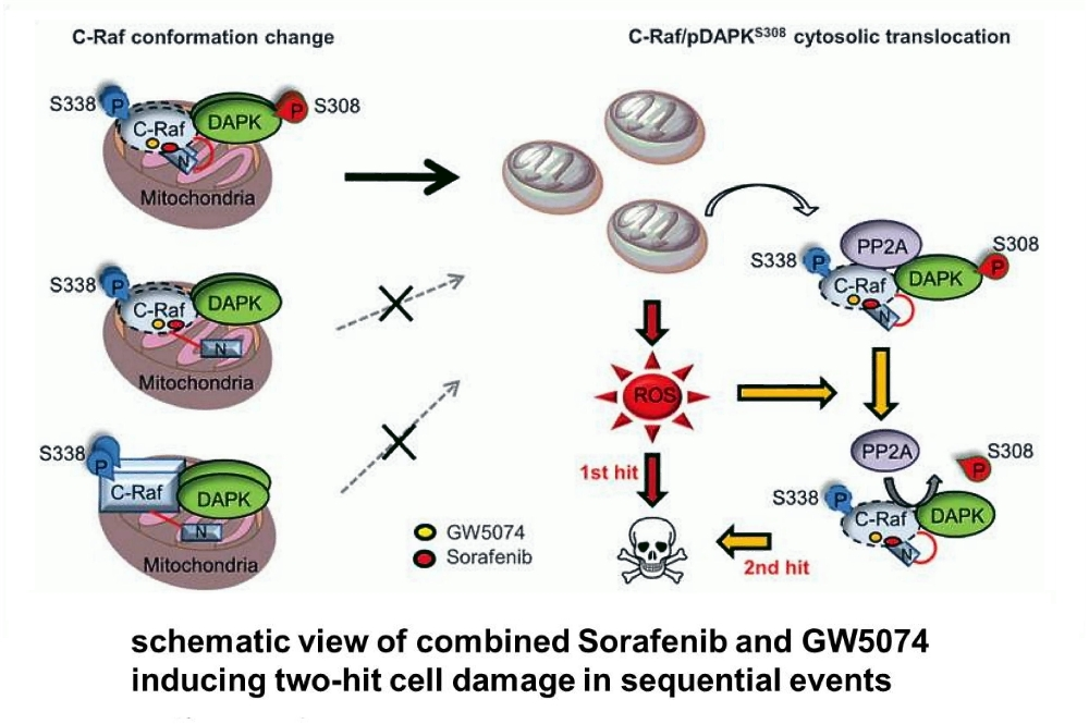 合併治療之分子作用機制