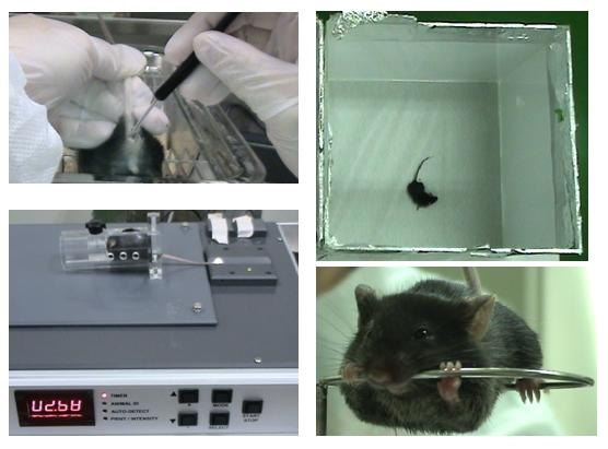 動物反應測試