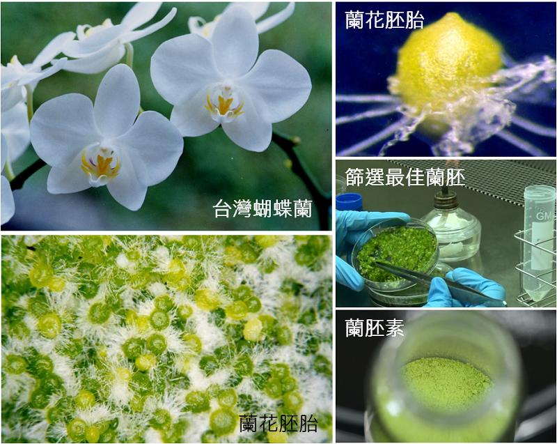 蘭胚素技術