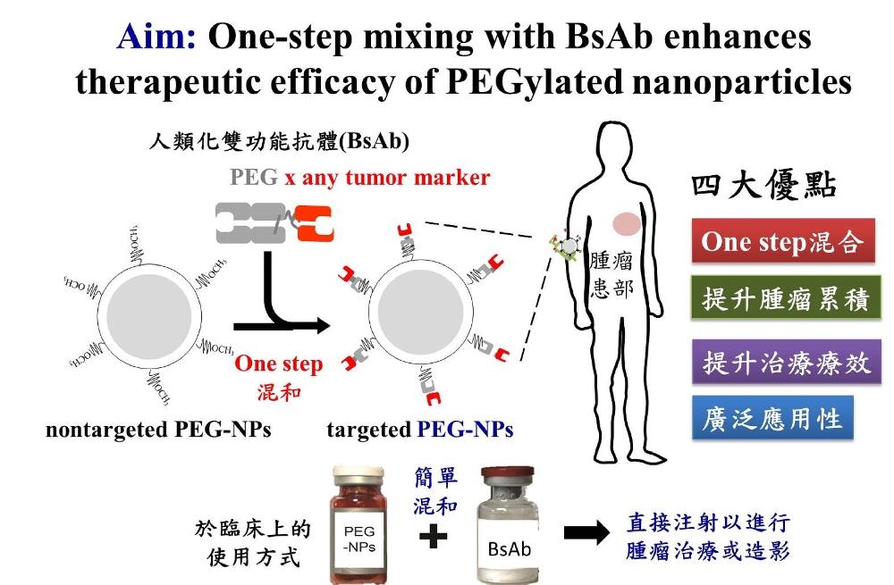 以人類化雙功能抗體One-step組裝具專一性之奈米載體以增進腫瘤累積與療效