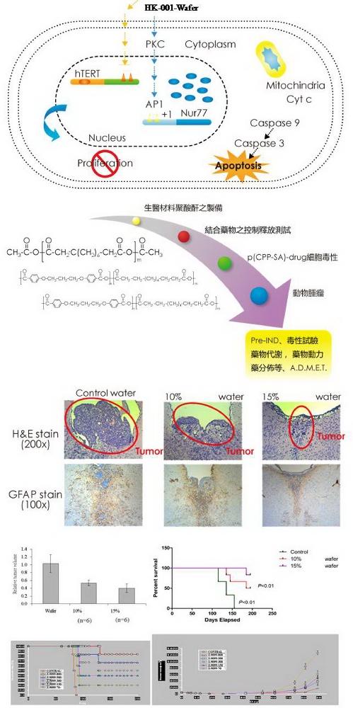HK-001-Wafer能夠有效抑制自發腦瘤鼠的腫瘤大小並增加其存活期