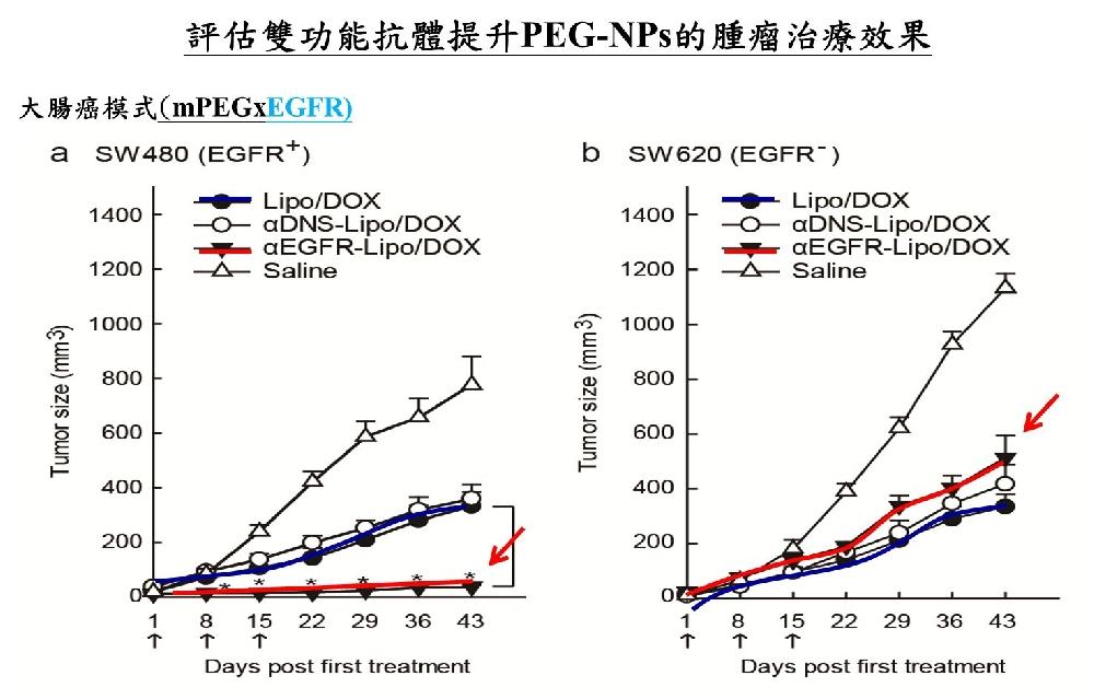 雙功能抗體修飾的targeted-NP有效的提升藥物對腫瘤生長的抑制情形