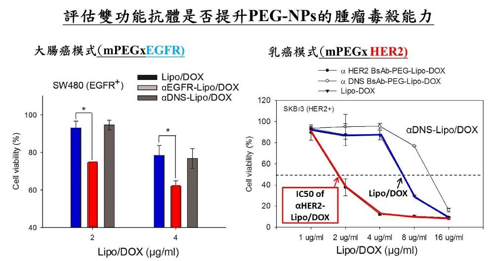 雙功能抗體經簡易一步與臨床PEG-NPs修飾後,便具有腫瘤專一性