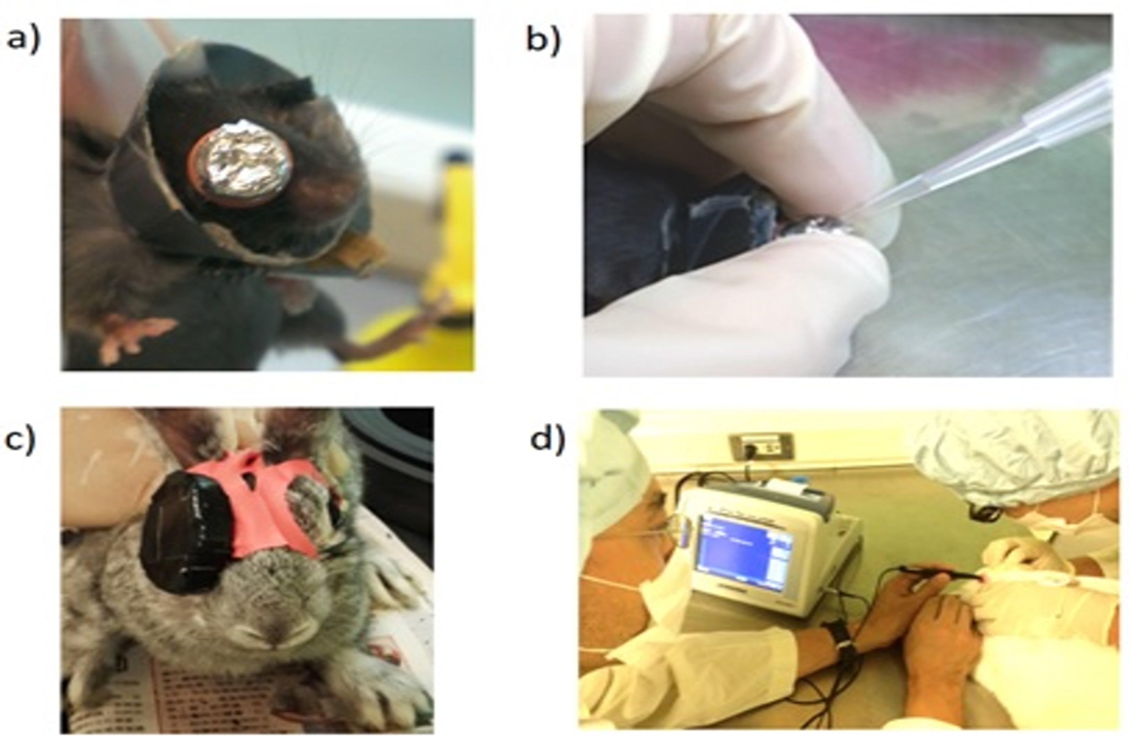a)小鼠近視模型;b)剝開鋁箔紙給藥;c)兔子近視模型;d)以Ascan測量兔子眼軸長