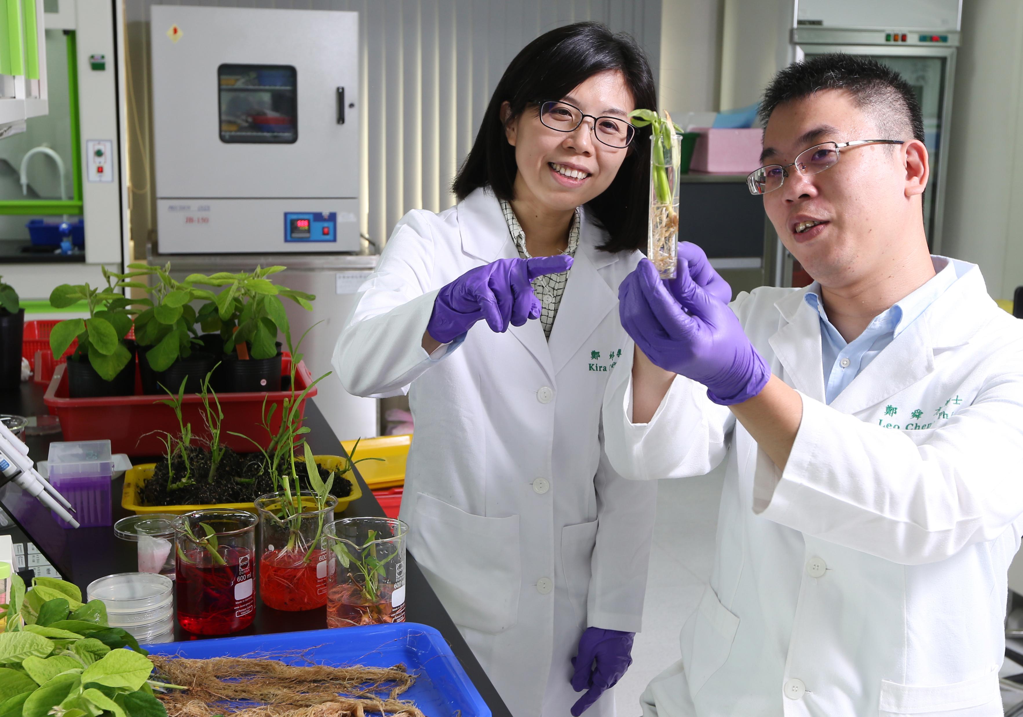 正瀚生技研發團隊由台灣優質博碩士所組成,針對作物生長發育核心的作用機制進行產品與技術的革新,並成功切入美國、加拿大、巴西、澳洲等一級農業市場