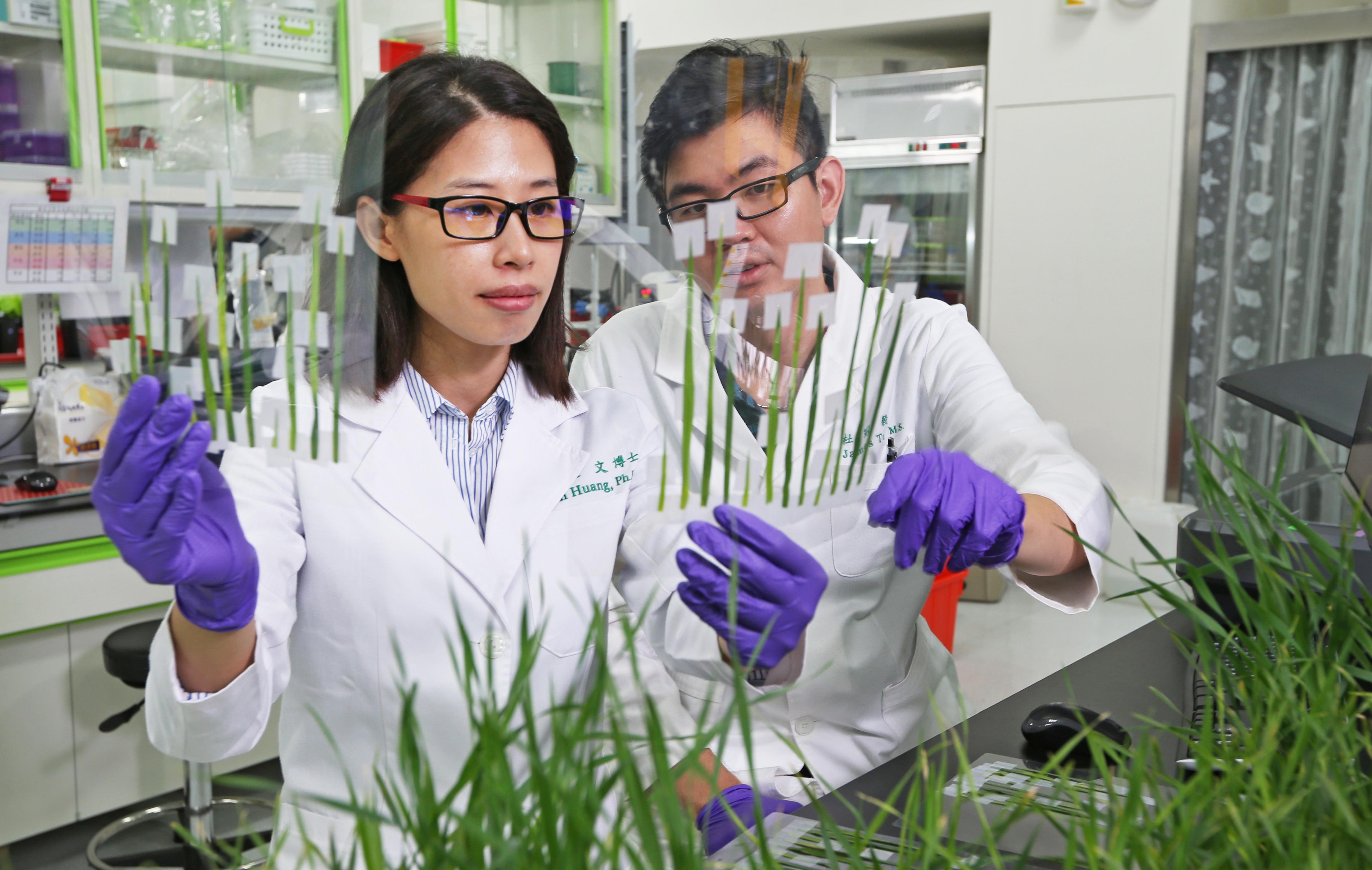 正瀚生技的研究範疇,從種子到果實、從基因功能到植物的外觀表形,系統化整合研究所得,提供最完整的產品解決方案