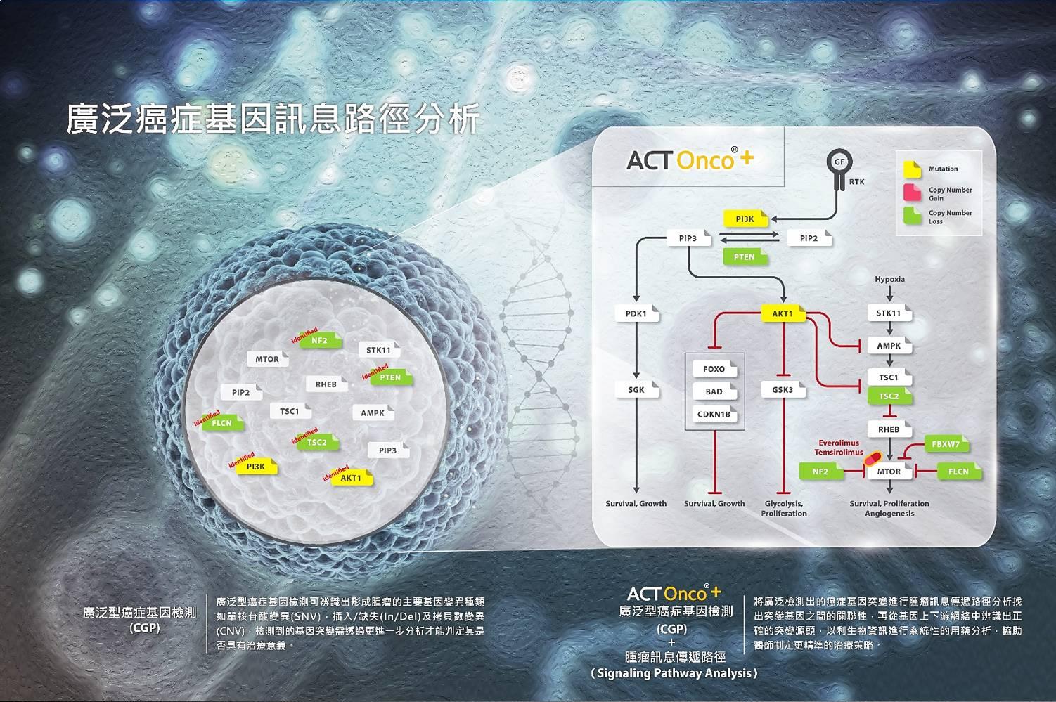 廣泛型癌症基因檢測(GCP)能廣泛地偵測癌症基因的突變訊息,獲得更完整的腫瘤基因突變資訊