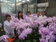 蘭花為我國重要花卉培育出口