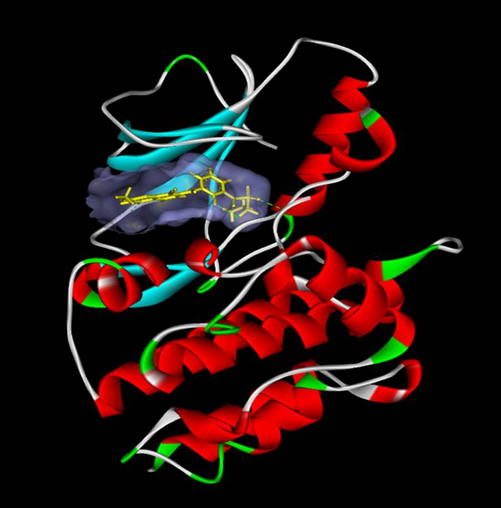 靶向RAF激酶,開發藥物新藍海