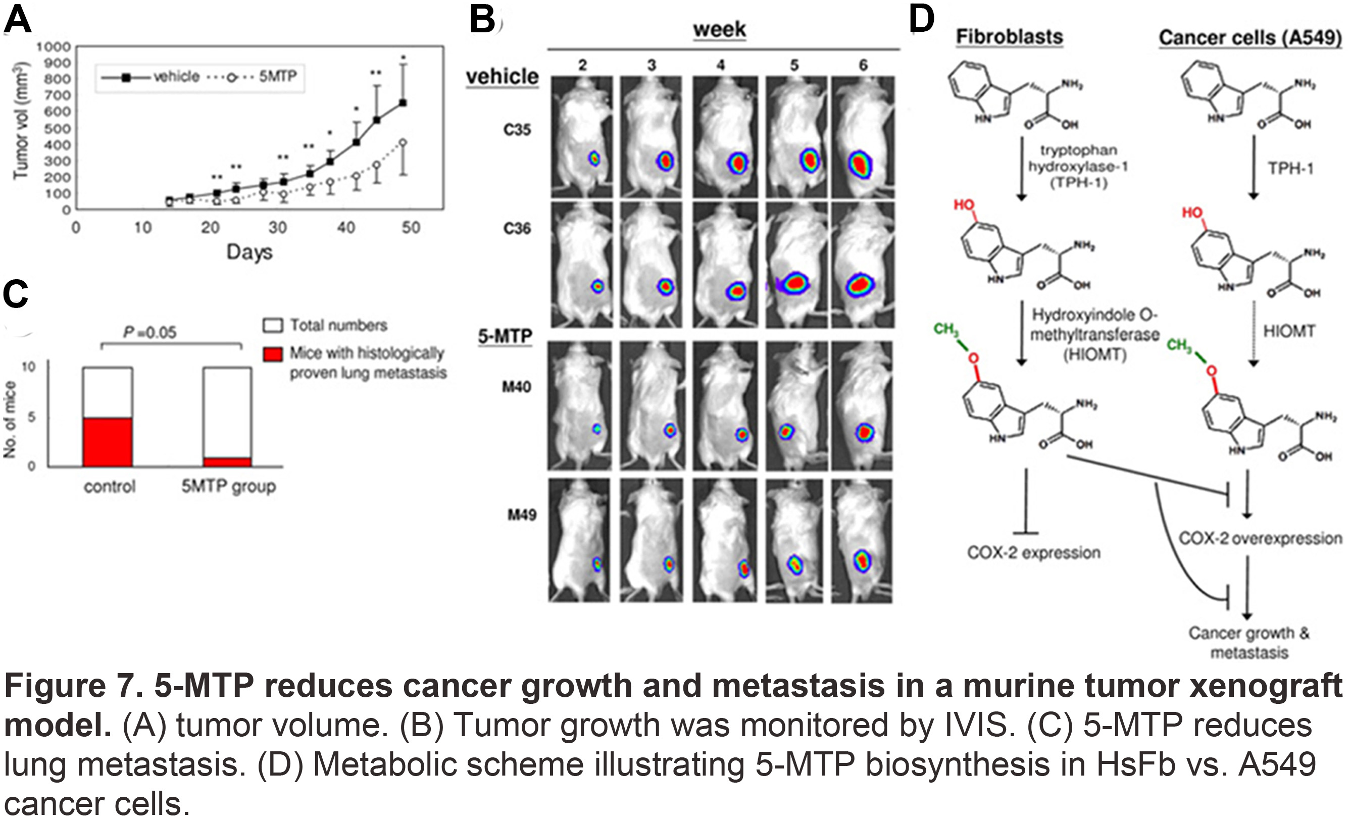 5-MTP reduces cancer growth and metastasis