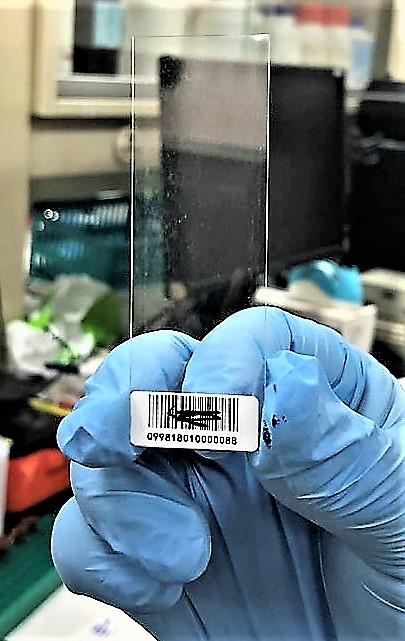 大腸桿菌蛋白質抗體微陣列晶片