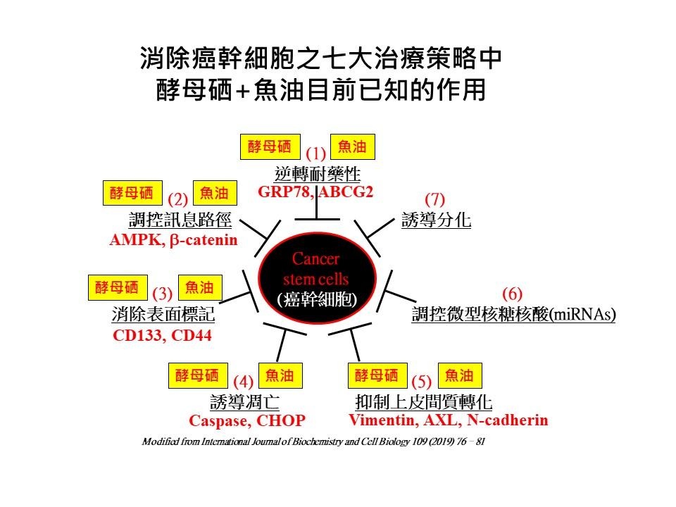 酵母硒+魚油消除癌幹細胞之作用