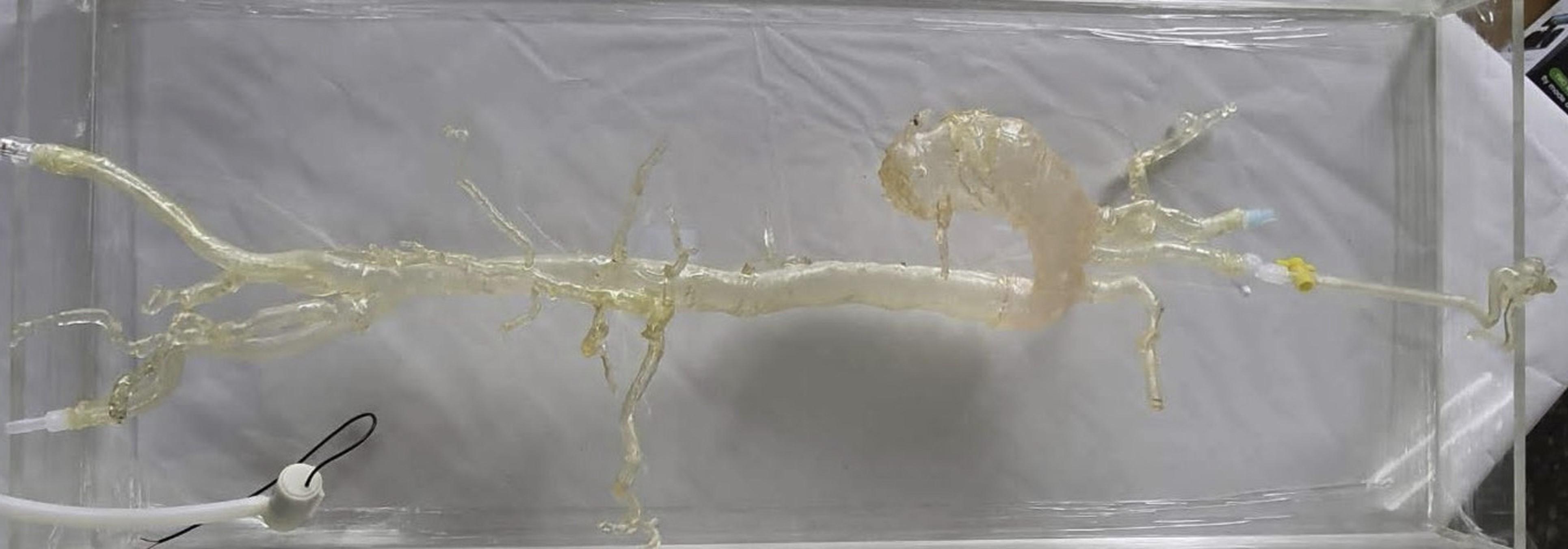 整合式擬真血管模具展示