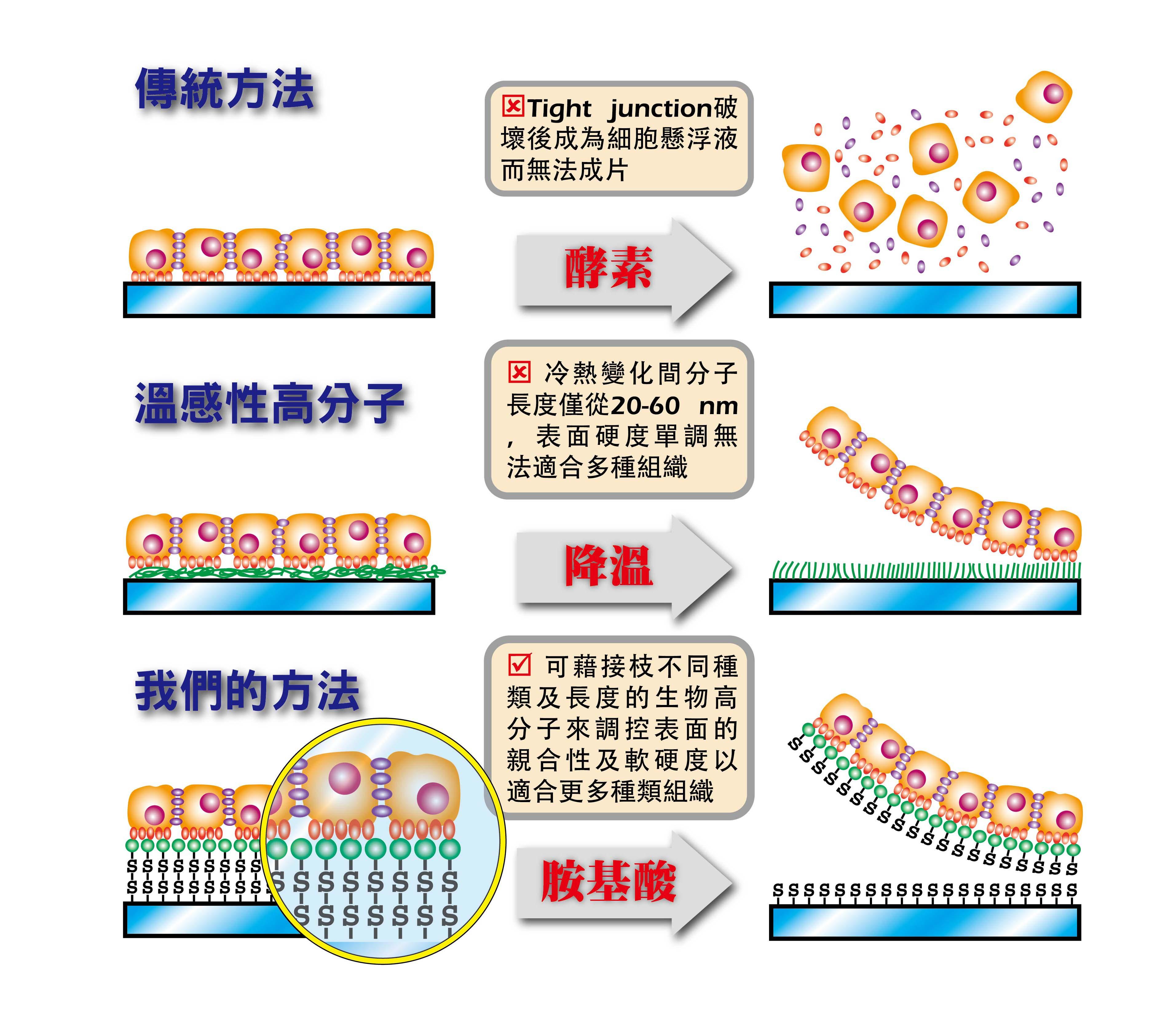 片狀細胞工程示意圖