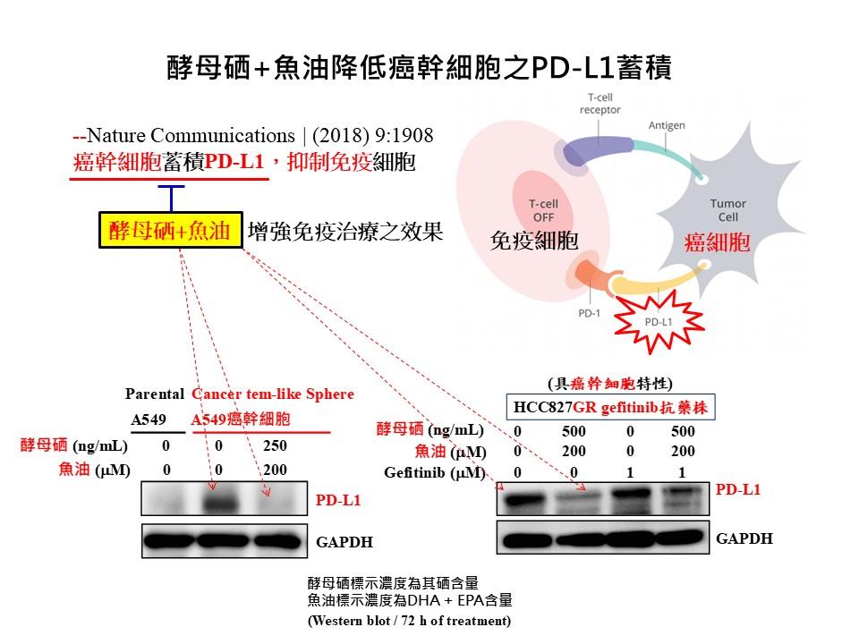 酵母硒+魚油降低癌幹細胞之PD-L1蓄積