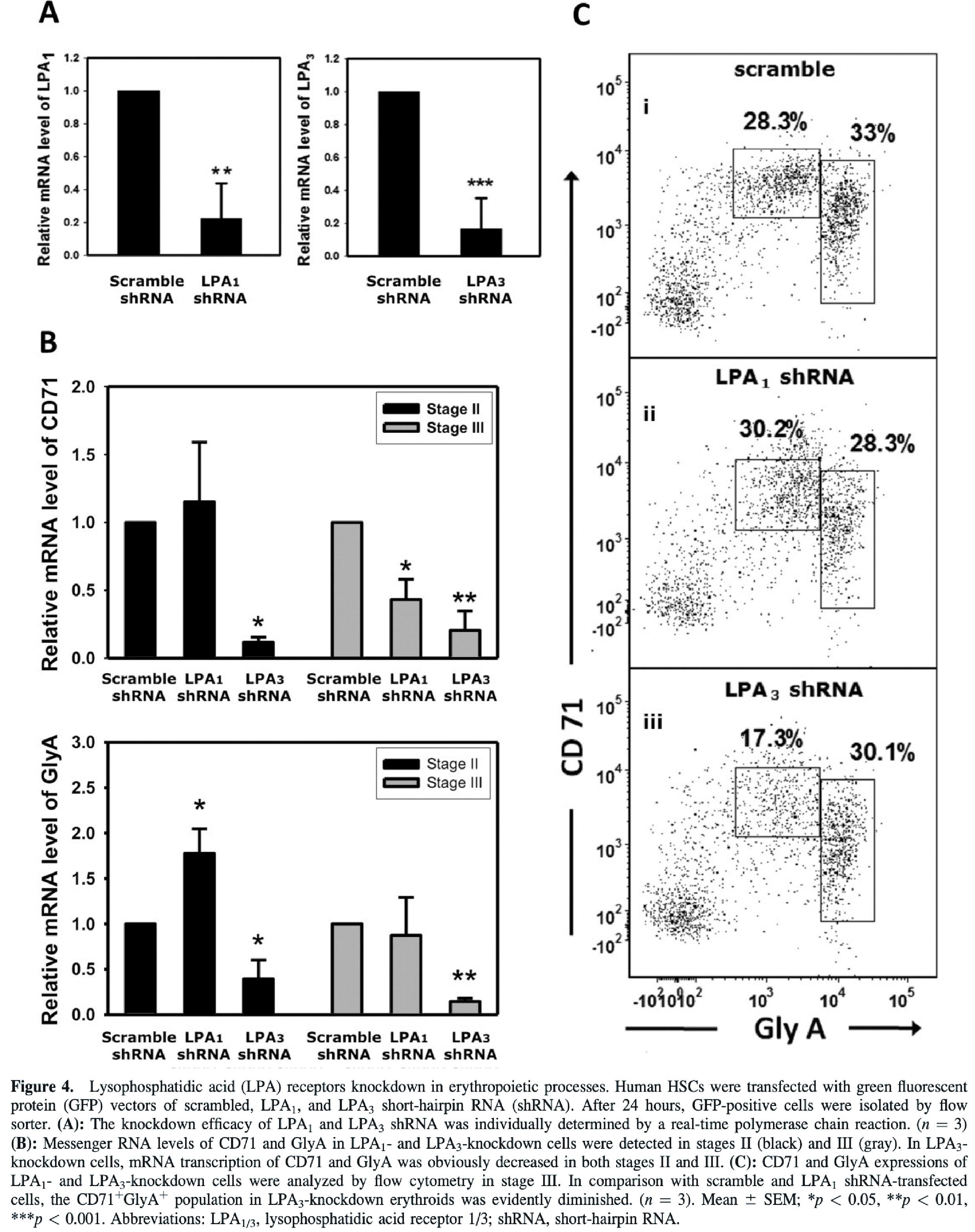 水解磷酸脂(LPA)受器於紅血球分化的過當中所扮演之角色
