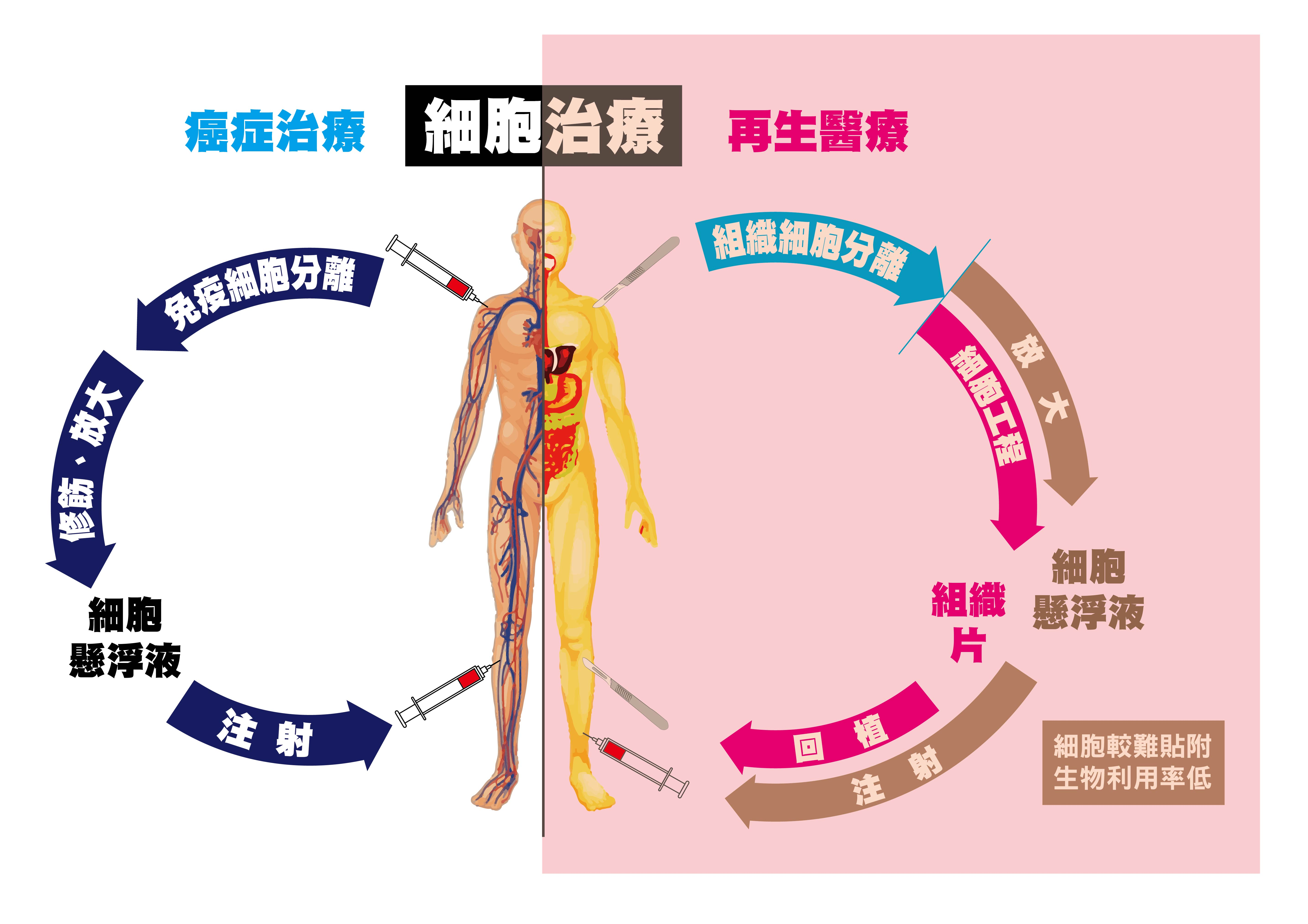 再生醫學導向細胞治療示意圖