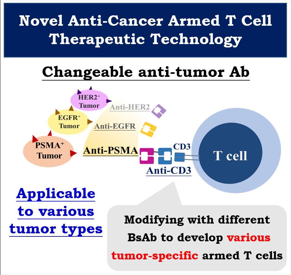藉由使用不同雙功能抗體,可快速建構各種腫瘤專一性T細胞