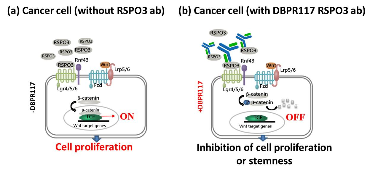 DBPR117作用機制圖
