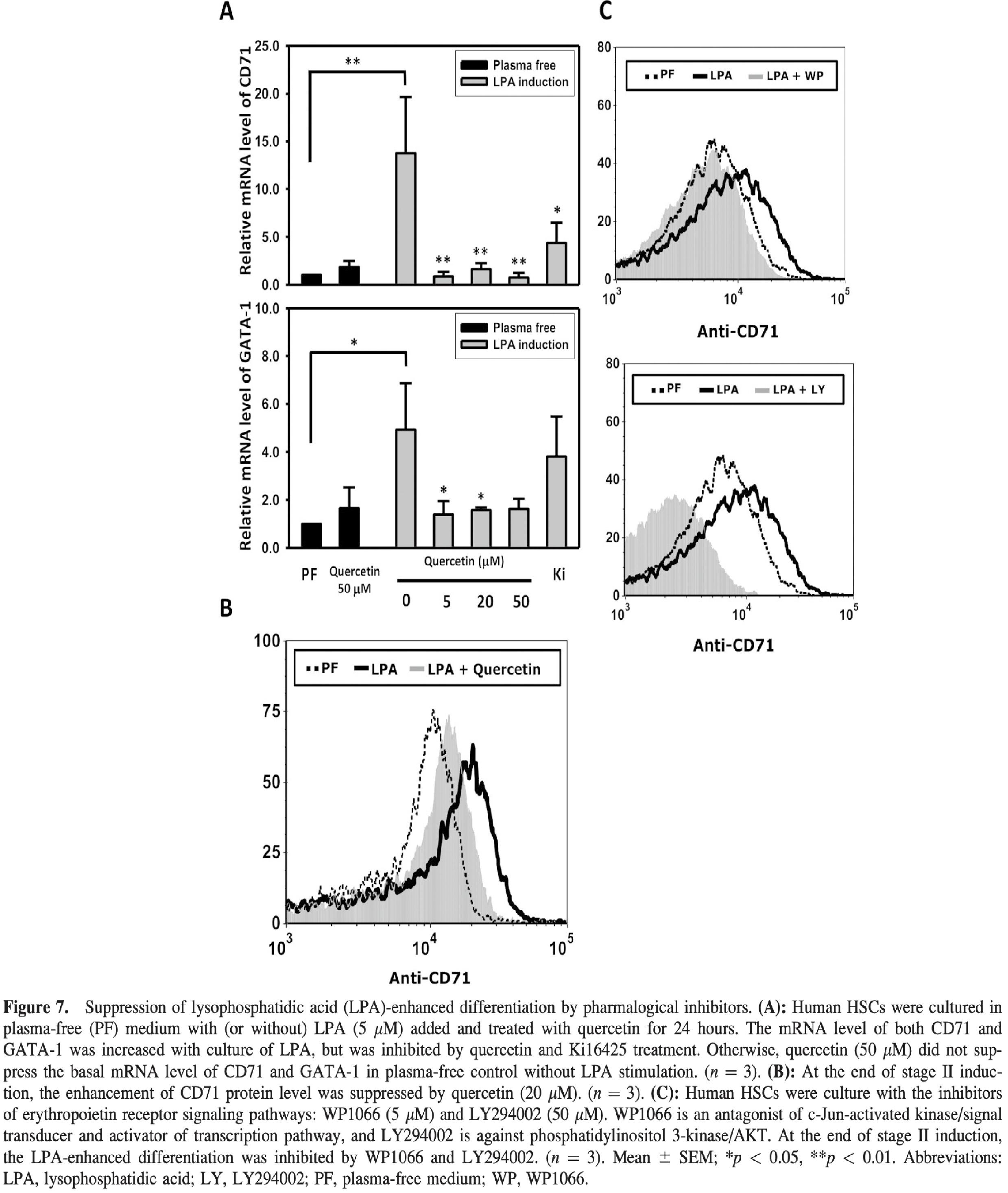 LPA經由其下游之訊息傳遞路徑影響紅血球生成