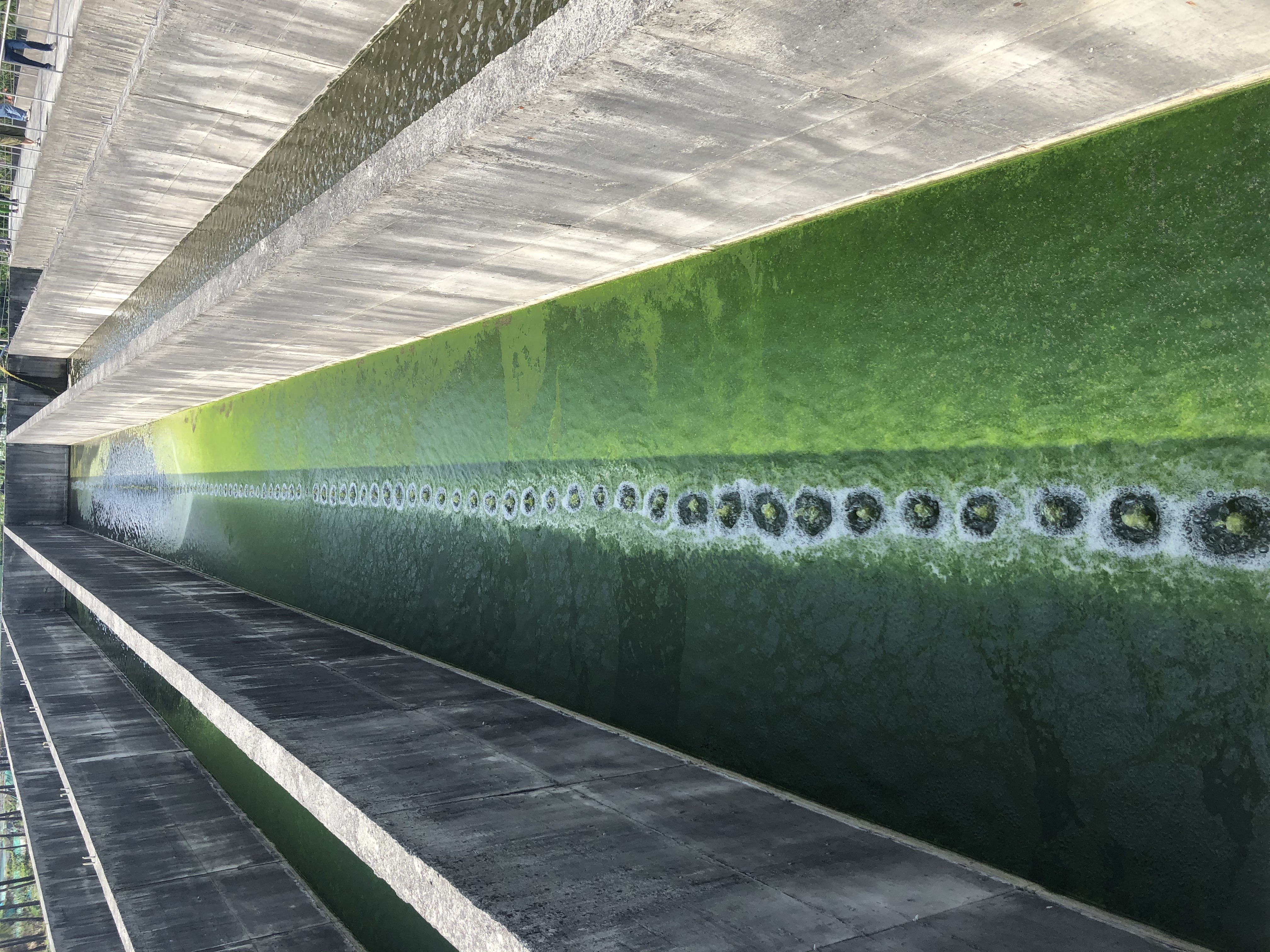 利用藻菌處理技術降低廢水中的COD及有機氮磷,並利用其過程所生產的微藻衍生出具有附加價值之產品 (液態肥料及水產飼料營養補充劑),打造全新的循環經濟模式。