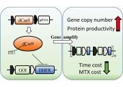 CRISPRi技術示意圖