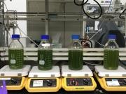 以藻菌共生方式進行工業廢水中COD及重金屬之移除。