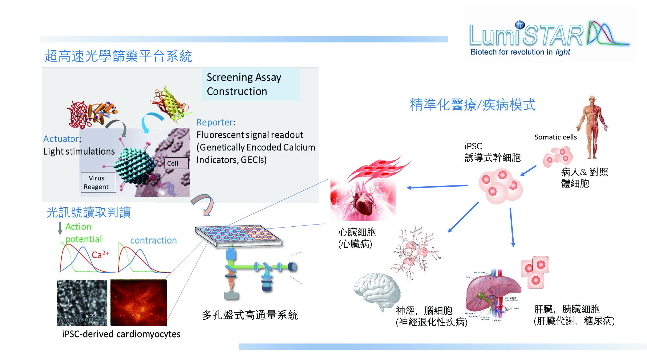昱星開發之高效能全光學藥物篩檢平台示意圖